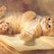 cica pihen a könyvön