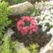 virágok 015