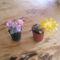 virágok 028