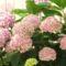 görög nyár,kert,Lorka,Apa 007