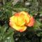 virágok 100
