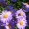 Zoli virágai