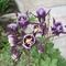 Zoli virágai-1
