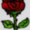 mosolygos rózsa
