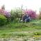Rododendrok és Azáleák szinpompája