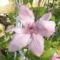 virágok 071