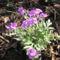 virágok 093