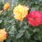 virágok 128