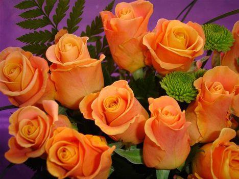 Narancssárga rózsák fogadd szeretettel!