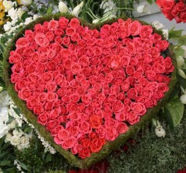 red_roses_heart1