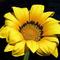 virág-3