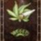 weed  cigi
