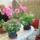 rozsák és loher virág
