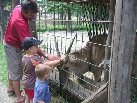 Miskolci állatkertben