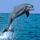 Delfin_36954_283042_t