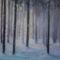 Erdő télen