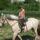 Viirág lovon