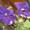 virágok 159
