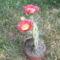 virágok 184