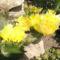 virágok 189