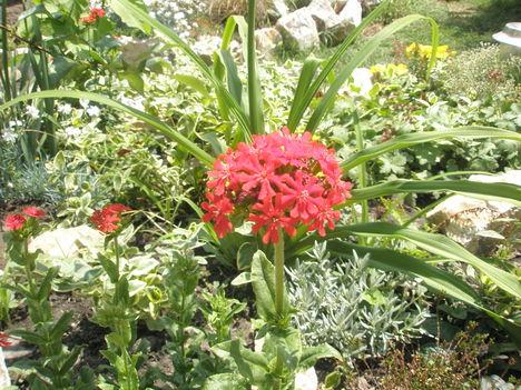 virágok 194
