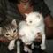 Három tesó cica