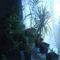 virágok+ alatuk a terárium meg az akvárium