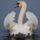 Swan_392737_89502_t
