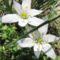 tavaszi virág 2