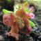 tavaszi virág 3