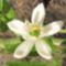tavaszi virág 4