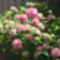 virágok 004