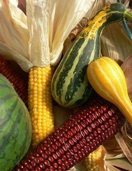 w-őszies-színek-termések