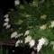 Éjjeli, világító, vattacukor fa