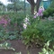 Gyüszüvirág