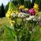 természet,virág