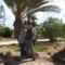 Pálmafa alatt