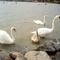 Velencei tó - 2007