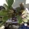 Mini Kaktuszkert