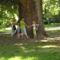 évszázados fa körül
