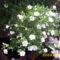 fehér függőkosár