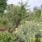 május a kertben3