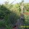 május a kertben5
