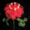 Kozmic rózsa