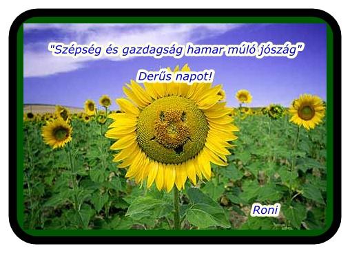 napraforgó idézetek mosolygó napraforgó (kép)