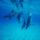 Delfin_449630_71201_t