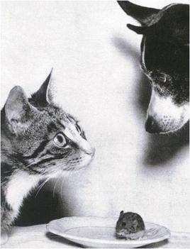 kutya macska egér