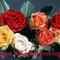 hétszál rózsa névnapra