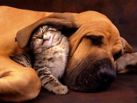 kutya -macska