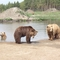 Medve-farm-3